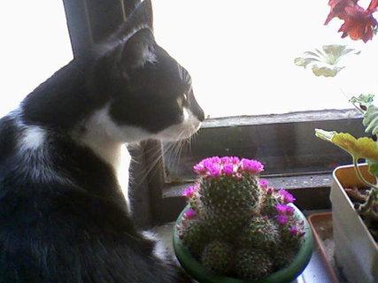 FOTKA - Kaktusek
