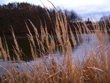 FOTKA - Hornomlýnský rybník - pohled přes suchou trávu ...