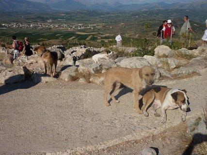FOTKA - Mykénští psi