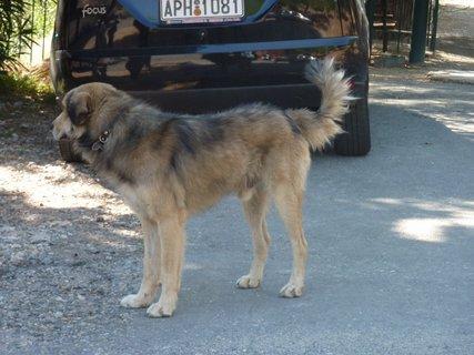 FOTKA - Pes z Nafplia