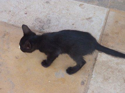 FOTKA - Koťátko z Nafplia