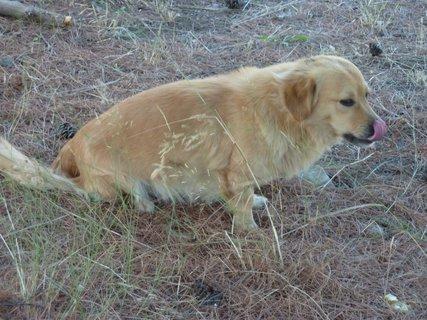 FOTKA - Pes z Epidauru