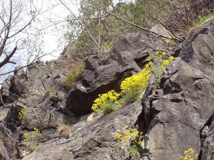 FOTKA - ve skalách nad řekou, žlutě kvetoucí tařice