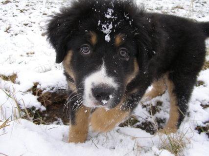 FOTKA - na sněhu ..