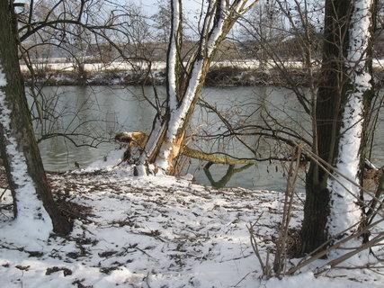 FOTKA - Zimní řeka 4