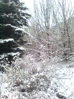 FOTKA - zahrada..2..
