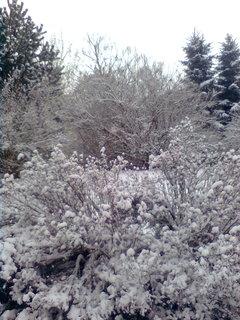 FOTKA - zahrada..4,
