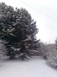 FOTKA - zahrada..5,