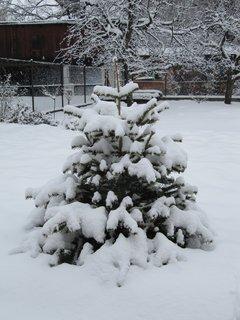 FOTKA - Náš vánoční stromek ozdobila zima :-)