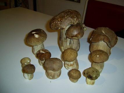 FOTKA - vzpomínka na houby