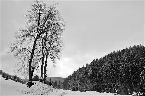 FOTKA - zimní krajina ...
