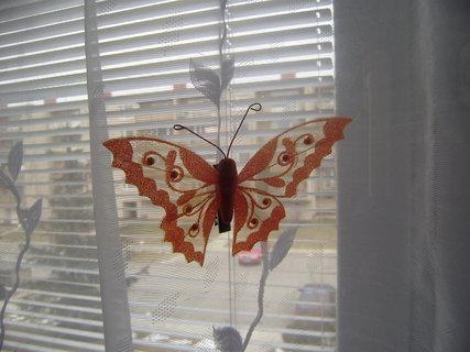FOTKA - motýl na zácloně