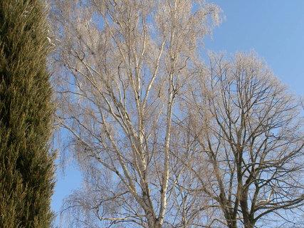 FOTKA - zima a zima