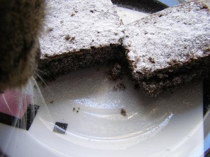 FOTKA - I kočka chce ochutnat