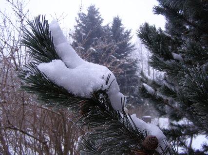 FOTKA - sníh na smrčku