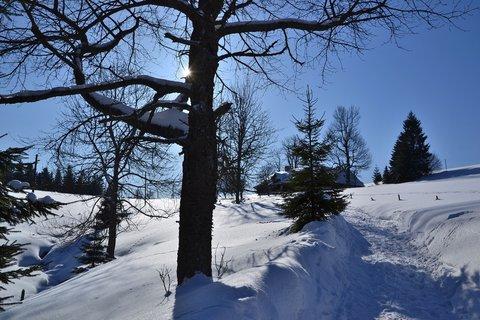 FOTKA - Za sluncem zimní krajinou