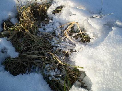 FOTKA - ormzlé trávy