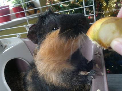 FOTKA - Jablíčko mám rád :-)