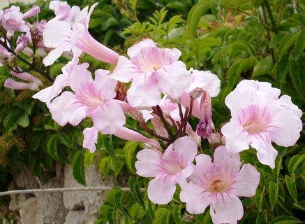 FOTKA - Květinka