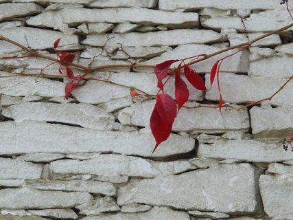 FOTKA - Podzimní