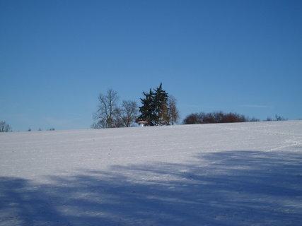 FOTKA - Muchomůrka v zimě  .