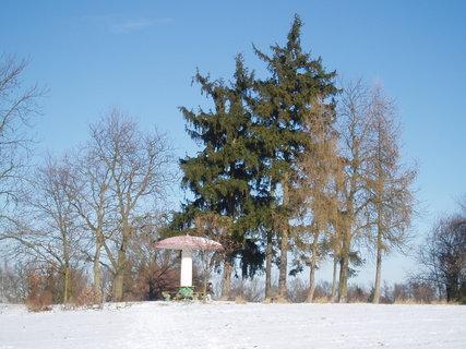 FOTKA - Muchomůrka v zimě  ..