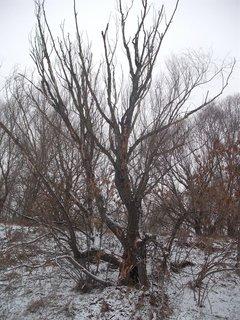 FOTKA - aj u nás už napadol sneh2