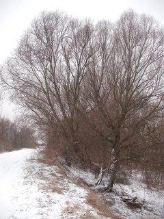 FOTKA - aj u nás už napadol sneh7