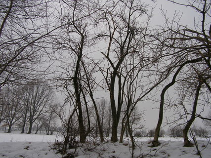 FOTKA - lesík