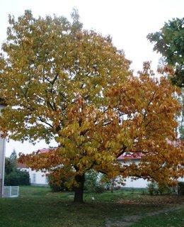 FOTKA - Stromy se barví