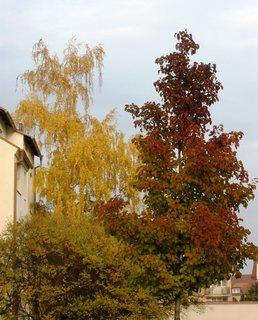 FOTKA - Barevné stromy