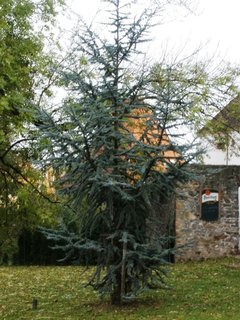 FOTKA - Zajímavě rostlý strom