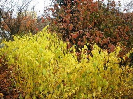 FOTKA - Listí různých barev