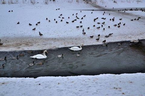 FOTKA - Ptačí sněm na řece