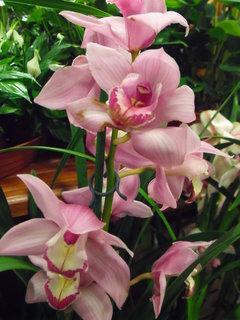 FOTKA - Výstava orchideí - 1