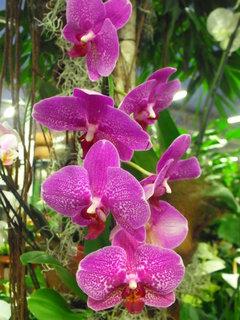 FOTKA - Orchidejka na výstavě