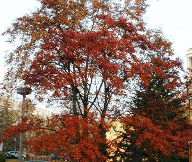 FOTKA - Zbarvený strom
