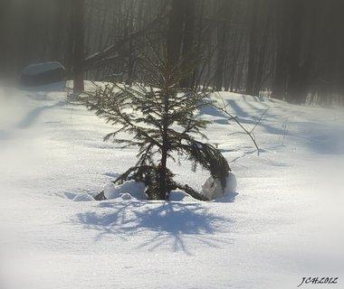 FOTKA - zimní zátiší....
