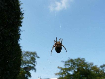 FOTKA - pavouk.