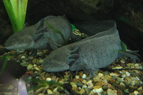 FOTKA - akvária