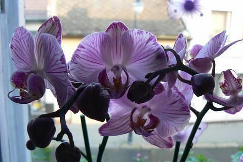 FOTKA - orchidej 16