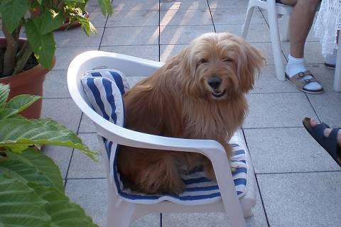 FOTKA - Míša na židli