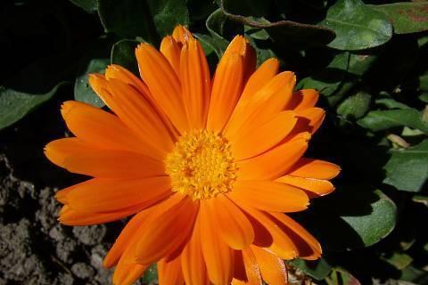FOTKA - Pln oranžové
