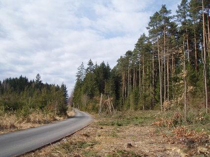 FOTKA - v lese - březen 2012