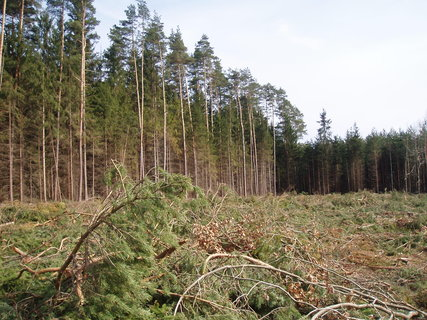 FOTKA - v lese - březen 2012 .