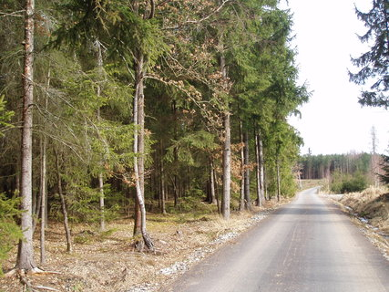 FOTKA - v lese - březen 2012 ...