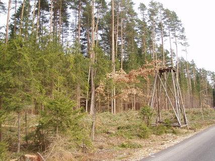 FOTKA - v lese, u posedu