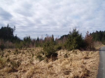 FOTKA - v lese - březen 2012 ....