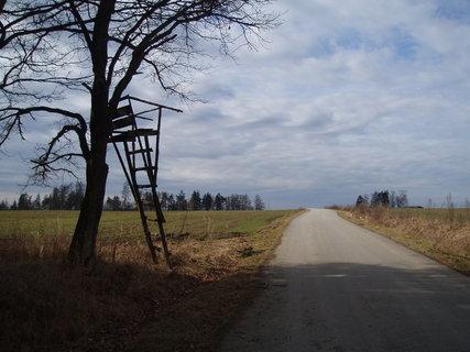 FOTKA - posed na kraji lesa