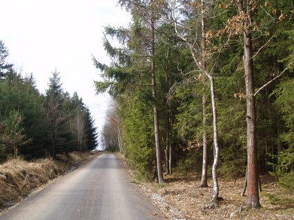 FOTKA - v lese - březen 2012 .....